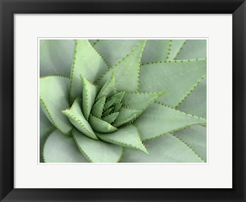 Framed Pointed Cactus Print