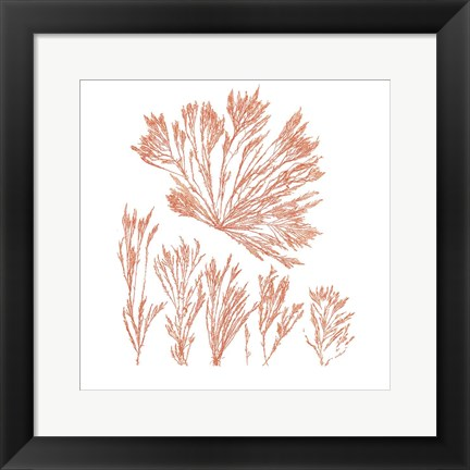 Framed Pacific Sea Mosses XXI Red Sq Print