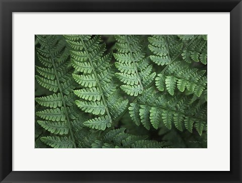 Framed Lady Ferns IV Color Print