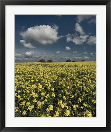 Framed Yellow Fields Print