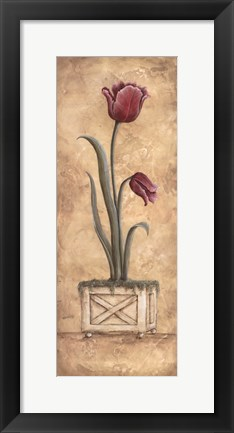 Framed Regal Tulip Print