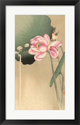 Framed Songbird and Lotus, 1900-1936 Print
