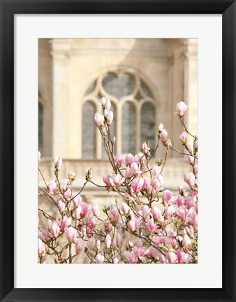 Framed Spring Magnolias In Paris Print