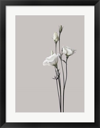 Framed Flower 2 Print