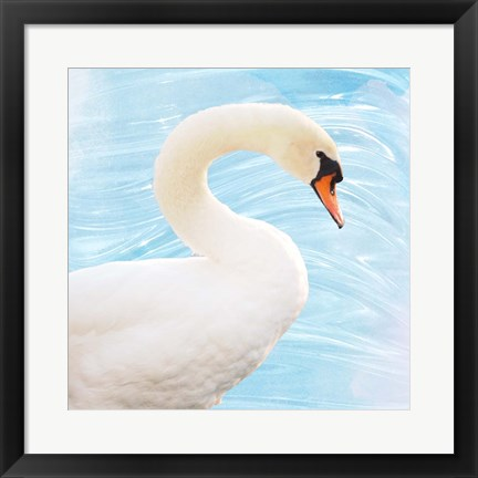 Framed White Swan Print
