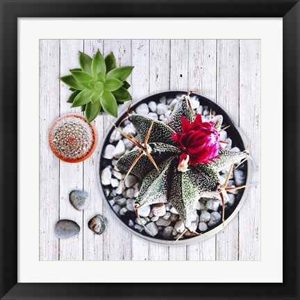 Framed Two Succulents and A Cactus Print