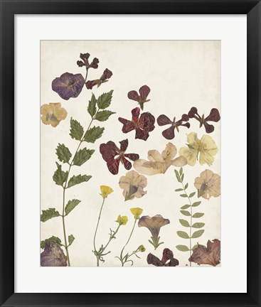Framed Pressed Flower Arrangement V Print