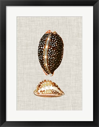 Framed Antique Shells on Linen IV Print