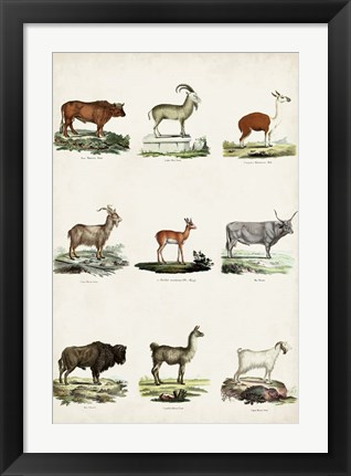 Framed Antique Animal Chart I Print