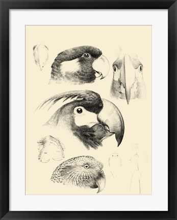 Framed Waterbird Sketchbook III Print