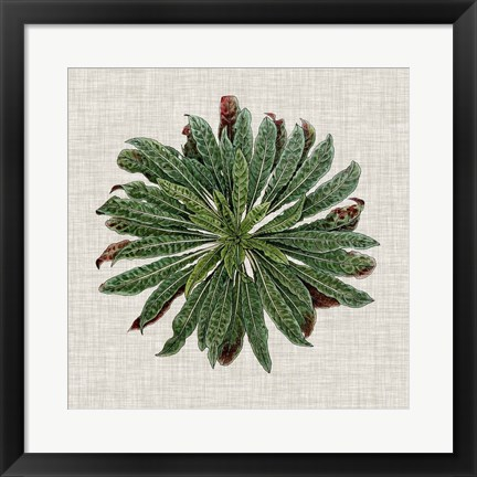 Framed Spherical Leaves II Print