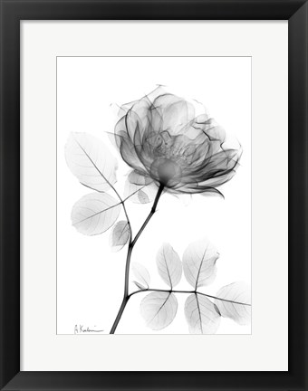 Framed Rose Dynasty 1 Print
