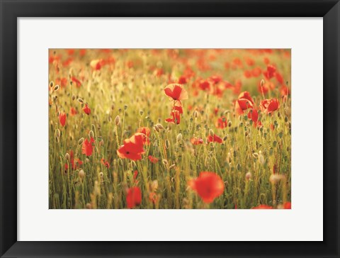 Framed Poppy Field I Print
