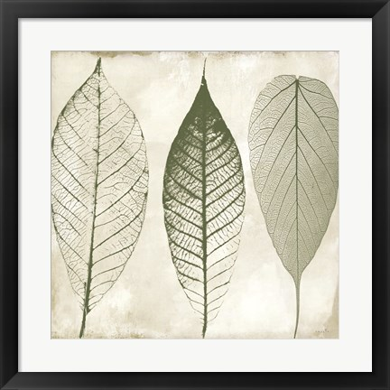 Framed Columbian Forest II Print