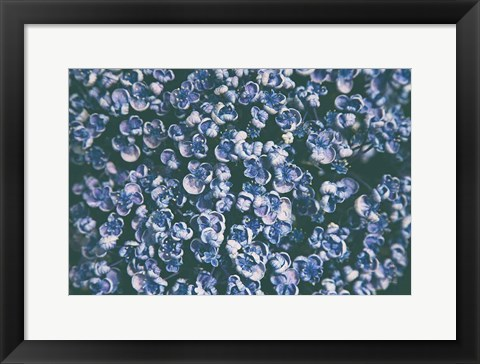 Framed Lilac Closeup Print