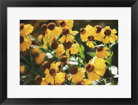Framed Autumn Flowers II Print