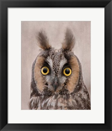 Framed Long-Eared Owl Print