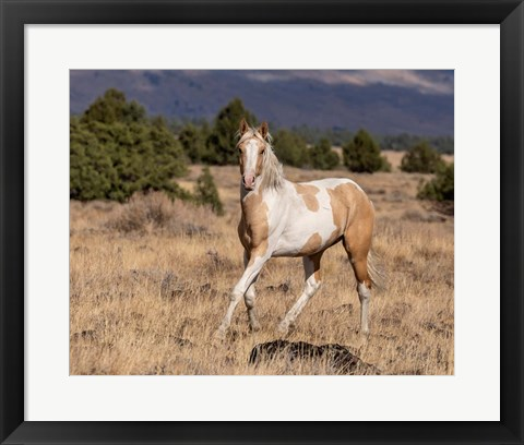 Framed Curious Colt Print