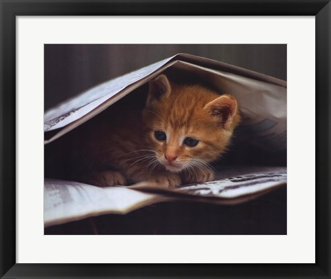 Framed Smart Cat Print