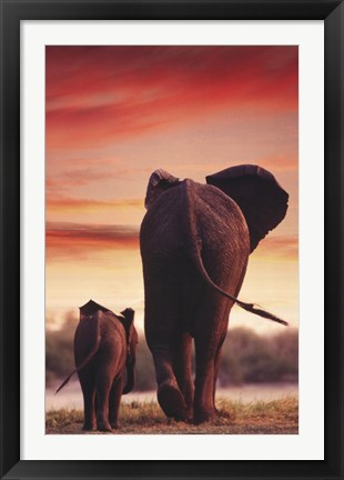 Framed Elephant Walking With Calf Print