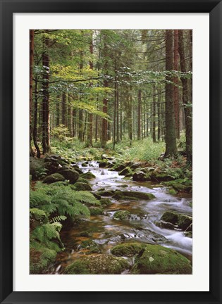 Framed Stream in Forest Print