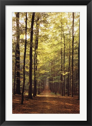 Framed Forest Path Print