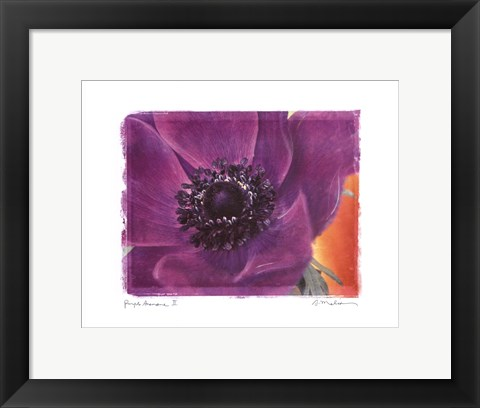 Framed Purple Anemones II Print