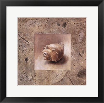 Framed Shell II Print