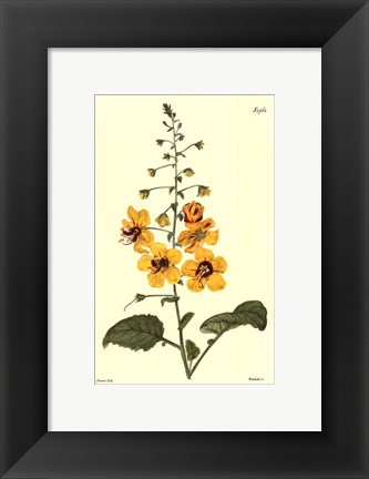 Framed Yellow Curtis Botanical II Print