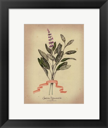 Framed Herb Series I Print