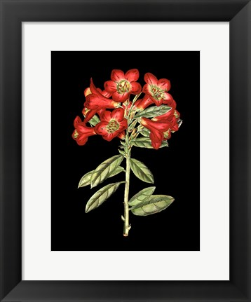 Framed Crimson Flowers on Black IV Print