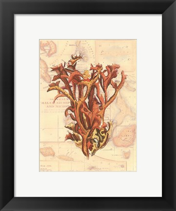 Framed Exotic Map with Coral II (D) Print