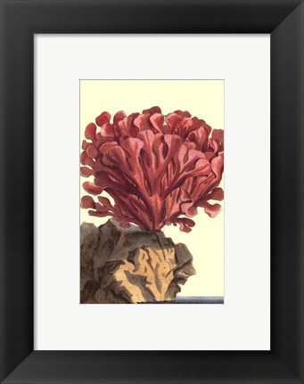 Framed Coral by the Sea IV Print