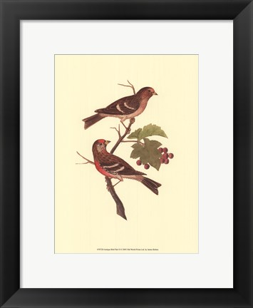 Framed Antique Bird Pair II Print
