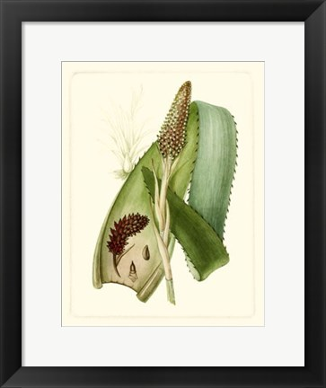 Framed Exotic Flora I Print