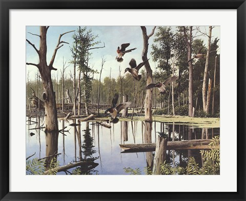 Framed Summer Refuge, Wood Ducks Print
