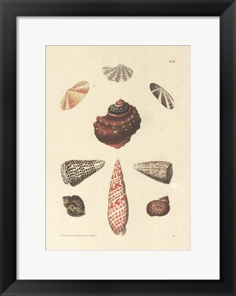 Framed Shells Print