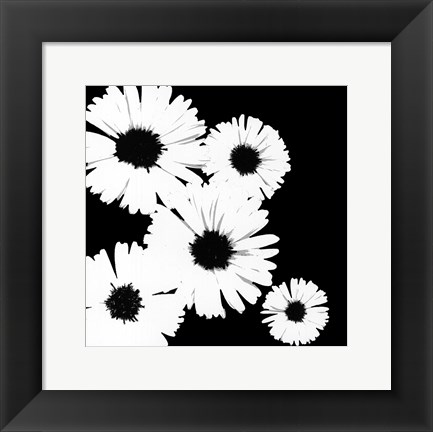 Framed Black/White Asters I Print