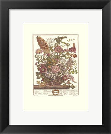 Framed August/Twelve Months of Flowers, 1730 Print