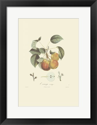 Framed Pears/Orange Rouge Print