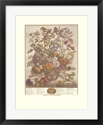 Framed May/Twelve Months of Flowers, 1730 Print