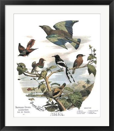 Framed Asian Birds Print