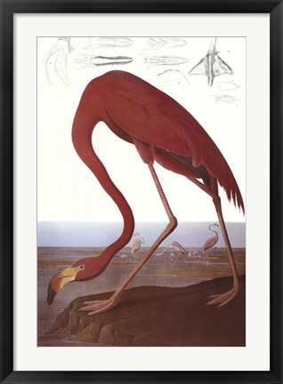 Framed American Flamingo Print