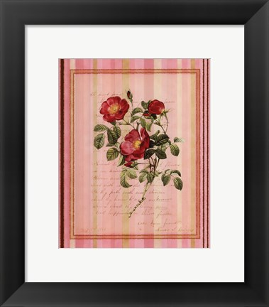 Framed Botanical Rose IV Print