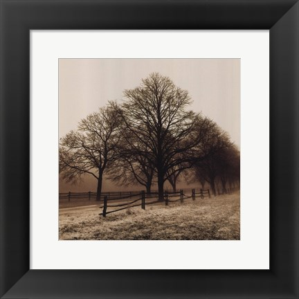 Framed Row of Trees Print