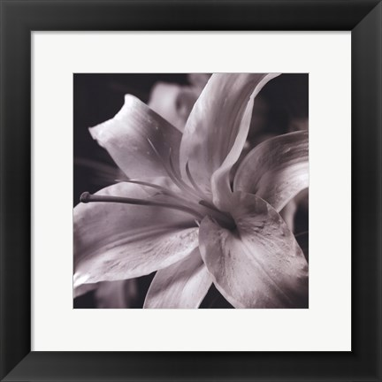 Framed Pure Lily Print