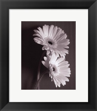 Framed Fresh Cut Gerbera Daisy I Print