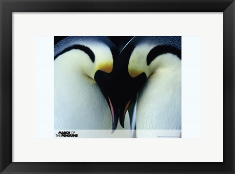 Framed March of the Penguins Love Print