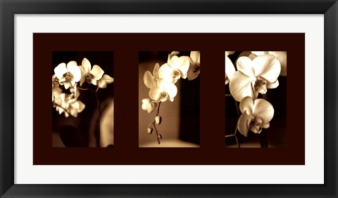 Framed Exotic Blooms Print