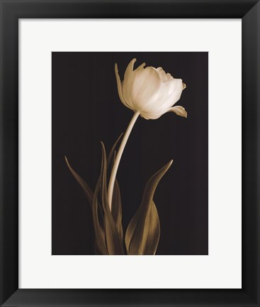 Framed Classic Beauty Print